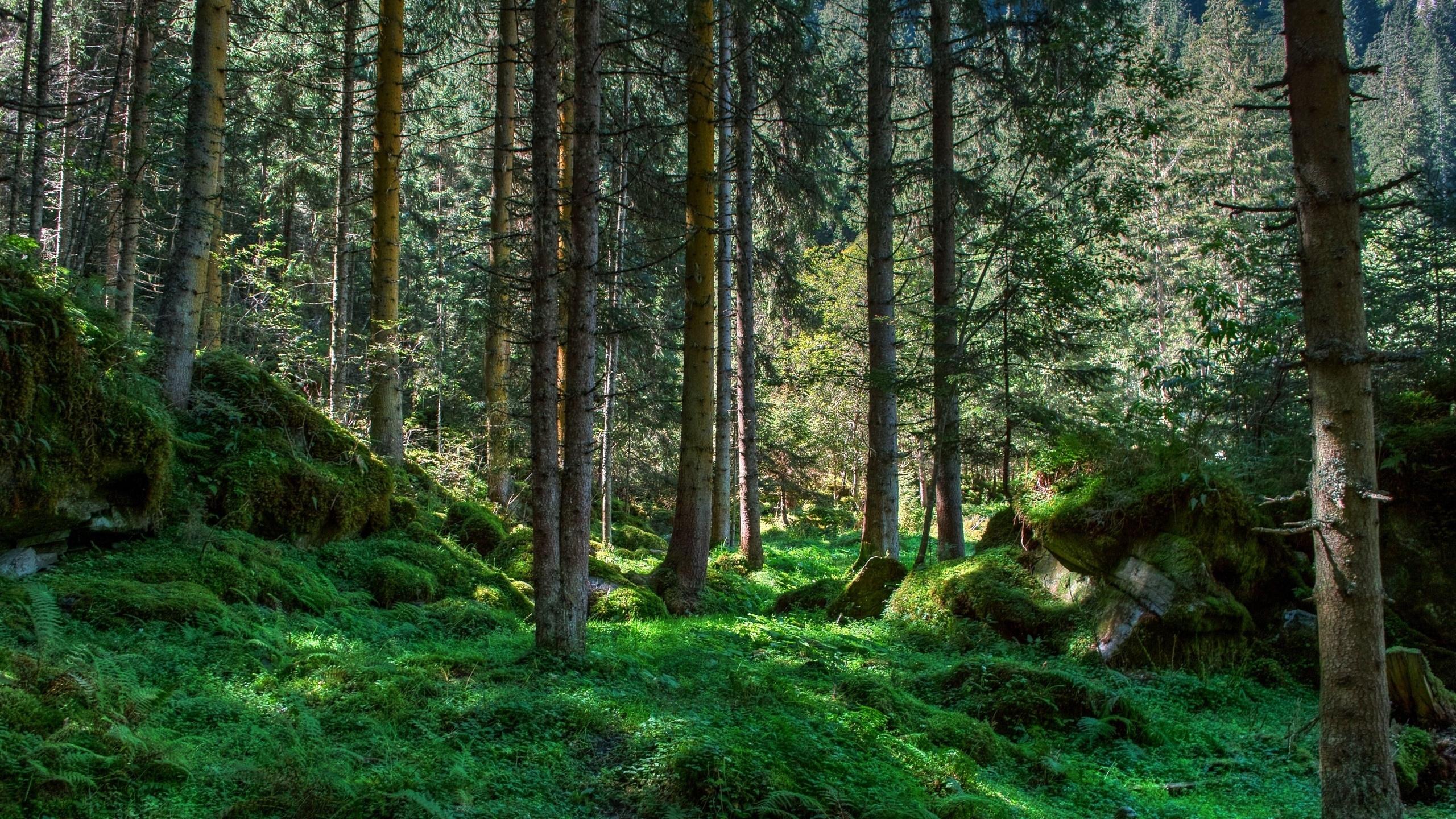 landscape_hdr_93600_2560x1440