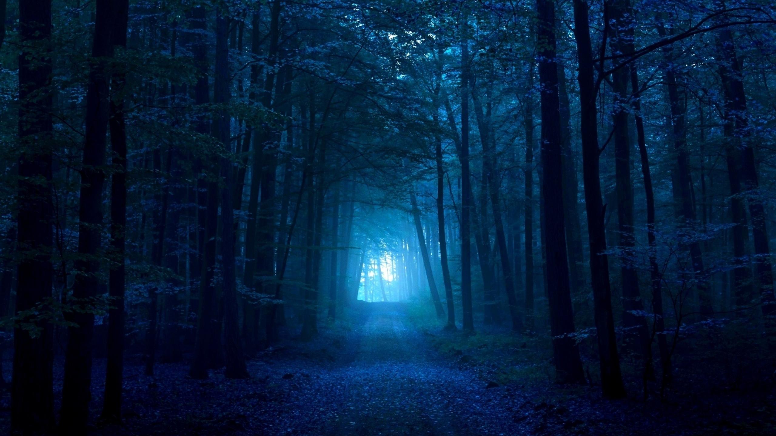 wood__53925_2560x1440